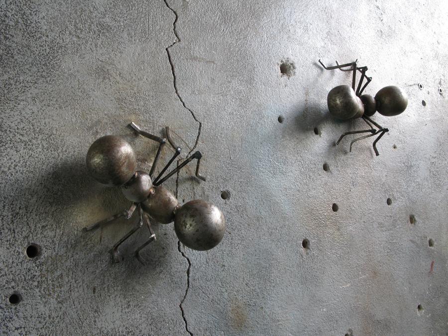 img-ants-001